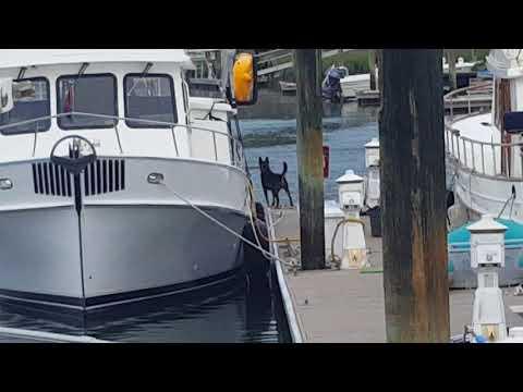 Dog Barking at Dolphins